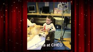 Ottawa Therapy Dogs At Work 2014