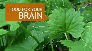 Gotu Kola Superfood Benefits + How To Grow
