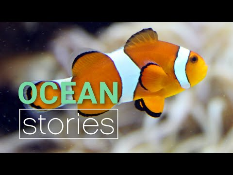 When Clownfish Attack (the Truth About Nemo) | Ocean Stories