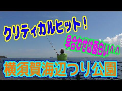 釣り動画ロマンを求めて 266釣目(横須賀海辺つり公園)