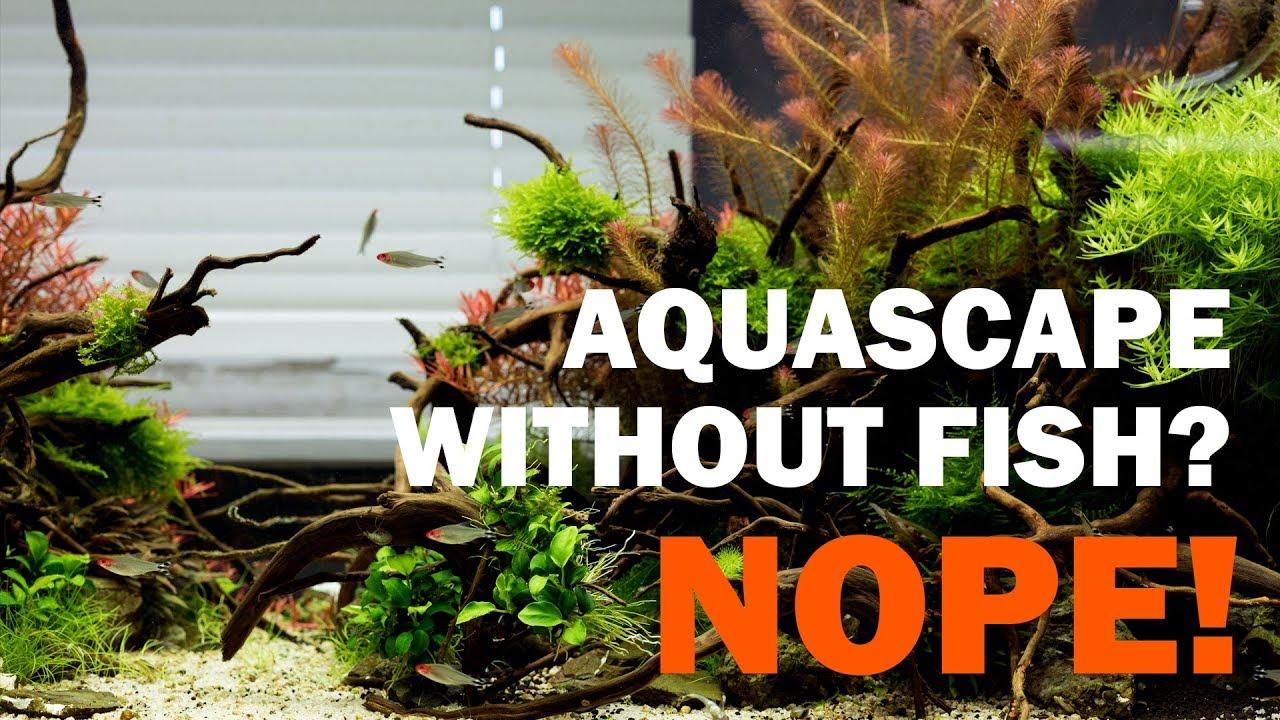 Aquascape Without Fish Nope Aquarium Plants Looks Beautiful With Ziolite Dan Only