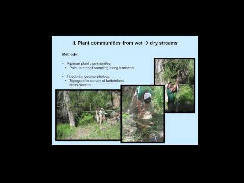 Climate Change and Riparian Forest Communities: Implications for Small Streams in the UCRB
