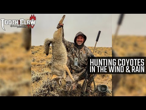 Hunting Coyotes In The Wind & Rain