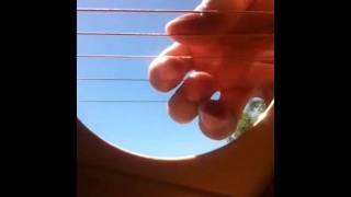 iphone 4 inside a guitar oscillation! VERY GOOD!