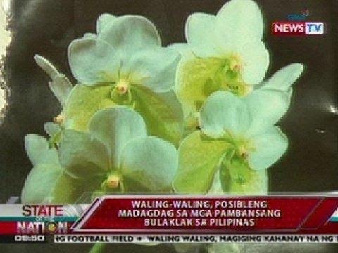 Sona Waling Waling Posibleng Madagdag Sa Mga Pambansang