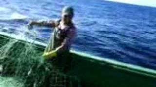 )PESCA DE CORVINA / rede de barco enrolada(