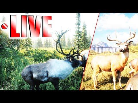 Layton & Yukon Trophy Hunting LIVE
