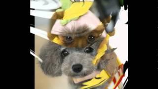 интернет магазин шапки для собак
