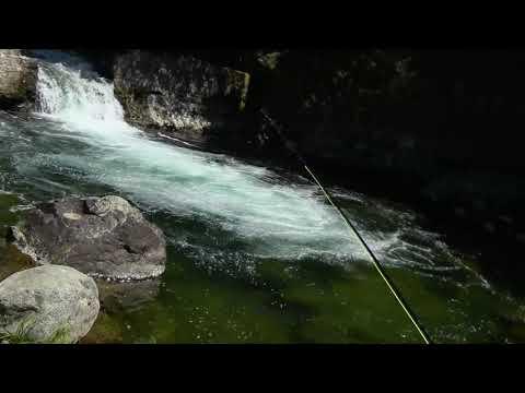 North Fork Yuba River Fishing