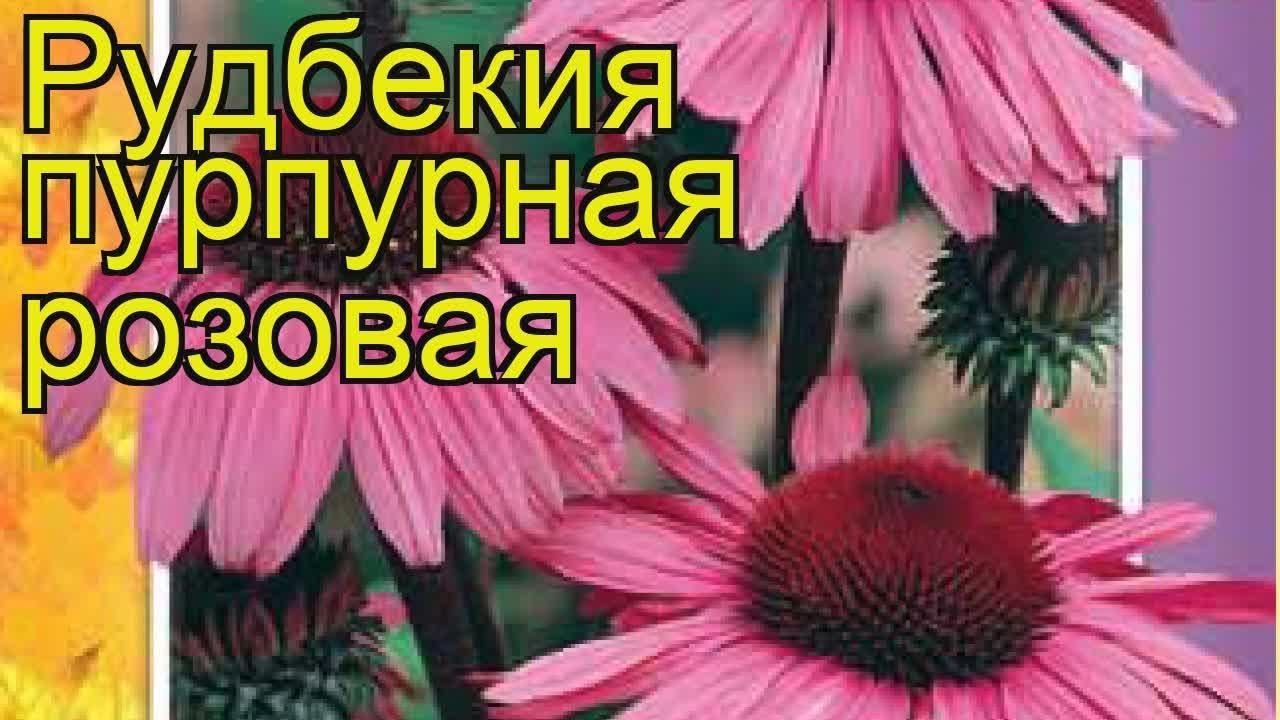 Абв цветы22. Рф, оптово-розничный магазин цветов. Всегда недорого цветы на срез, комнатные растения. Доставка по городу. Барнаул, матросова.