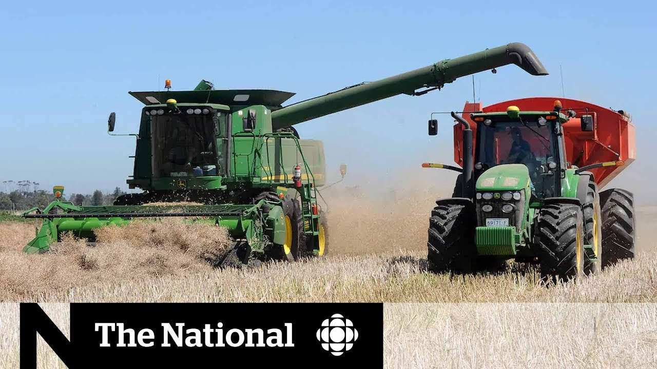 Canada-China dispute deepens as Canadian canola exporter blocked from key Chinese markets