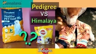 Pedigree vs Himalaya Dog food // street survey Over 50 dogs// SECULAR_LOVE
