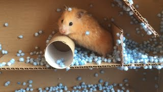 Funny Hamster Jerry runs out Maze with beads BEANBAG