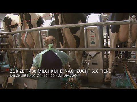 GEA Dairy Farming - Apollo™ MilkSystem für beste Milchqualität und Eutergesundheit