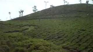 Tea estates at Wayanad!