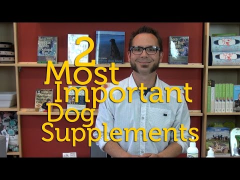 Two Most Important Supplements For A Healthy Dog