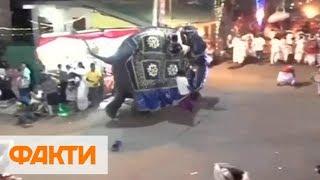 На Шри-Ланке слоны бросились в толпу во время парада - 17 раненых