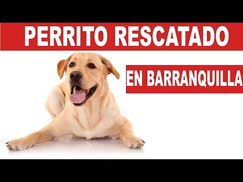 Perrito rescatado de un arroyo en Barranquilla | Tu Mascota TV