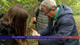 Yvelines | Une matinée cueillette de champignons en  forêt de Marly