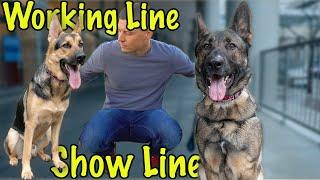 Working Line vs Show Line German Shepherds? Beginners Help!