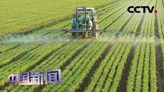 [中国新闻] 今年中国农产品供给总量仍较充足 | CCTV中文国际