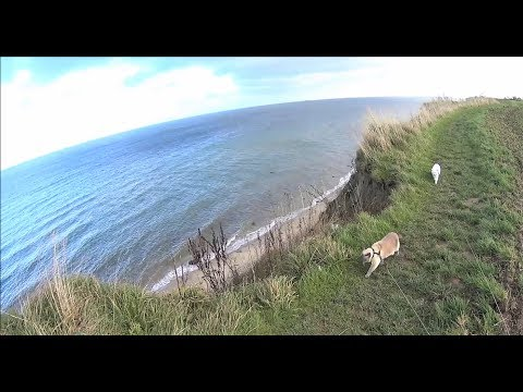 Vacation with Siamese Cats: Explore Baltic Sea Cliff Coast & Beach for the First Time (On Leash)
