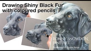 Drawing black shiny fur with coloured pencils