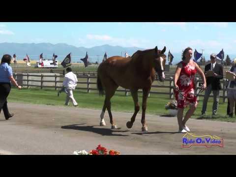 381J1 Lea Wilson On Samurai Novice 3-Day FEI Jog 1 The Event At Rebecca Farm July 2015