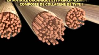 L'os un tissu vivant -- Au cœur du processus de minéralisation -- Servier TechBlog