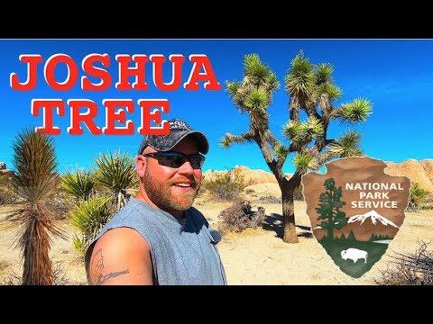 Joshua Tree National Park & Jax Bath