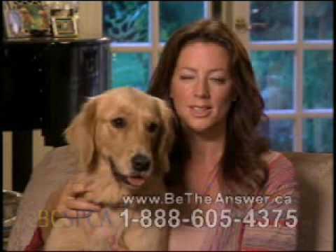 Sarah McLachlan SPCA Commercial