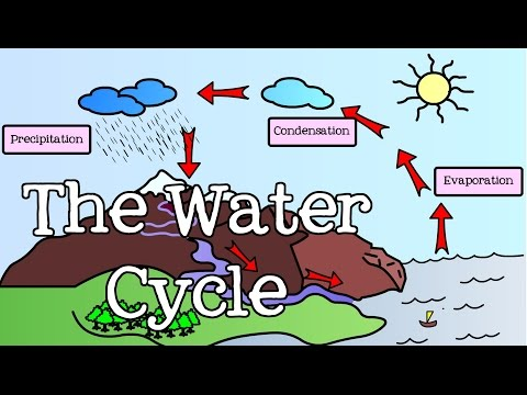 All About the Water Cycle for Kids: Introduction to the Water Cycle for Children - FreeSchool