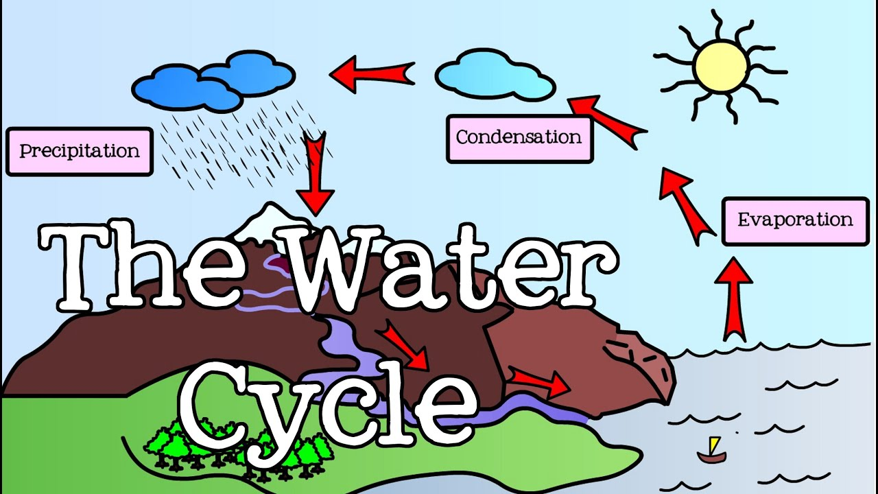 Explain Water Cycle With Diagram Roofing Terms All About The For Kids Introduction To