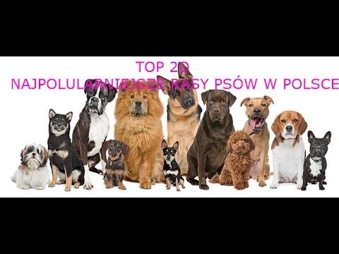 Top 20 Najpopularniejsze Rasy Psów W Polsce Youtube
