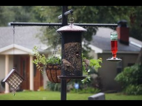 best squirrel proof bird feeder pole and baffle system youtube