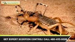 Scorpion Control Maricopa County AZ Exterminator 480-493-5028 Ozone Pest Control