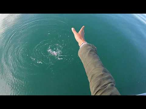 Brighton Inshore Fishing