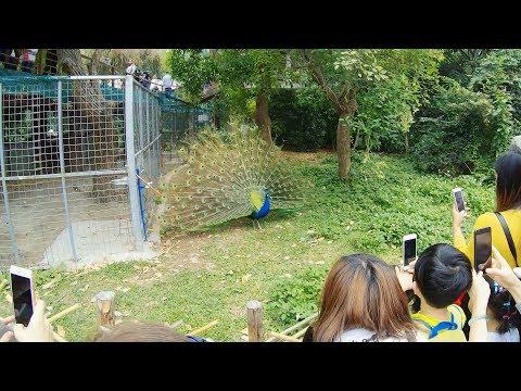 Guangzhou Zoological Garden:Part 1, Guangzhou /廣州動物園:Part 1, 廣州 [4K 60FPS]