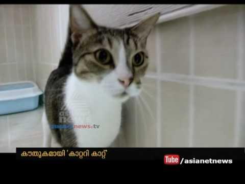 Catari Cat Hotel Qatar | Gulf News