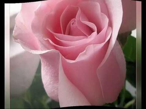 Все цветы для тебя картинки