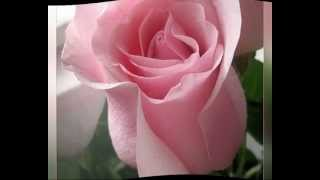 ВСЕ ЦВЕТЫ ДЛЯ ТЕБЯ!!!.mp4(видеооткрытка)(ВИДЕООТКРЫТКА., 2012-05-05T12:11:43.000Z)