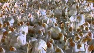 La surconsommation de viande et ses impacts