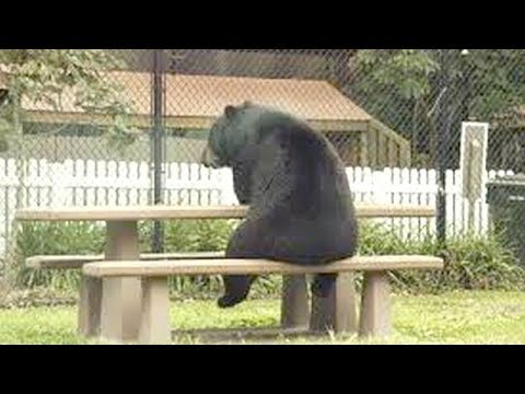 ANIMALS that will MAKE YOU LAUGH EXTREMELY HARD - Funny RACCOONS SQUIRRELS and ANIMALS compilation