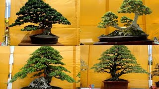 Pameran bonsai nasional ponorogo 2018 bernilai ratusan juta rupiah