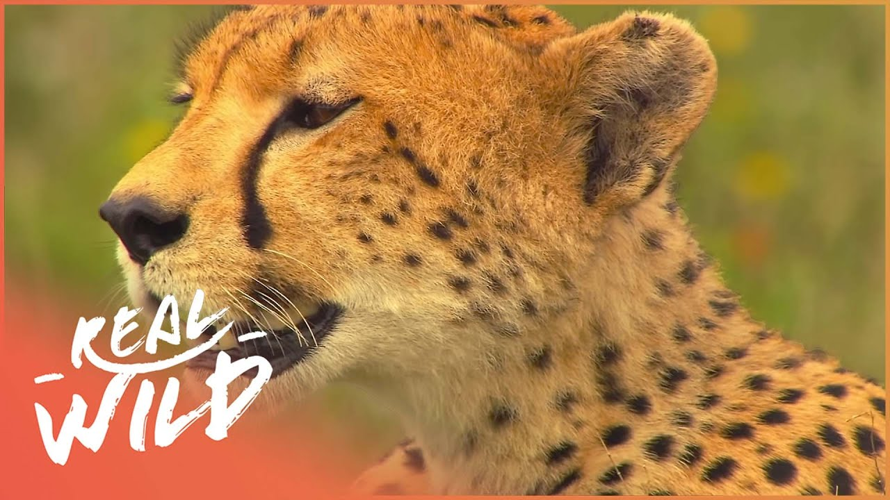 Download How Animals Learn To Hunt | Deadly Game | Real Wild
