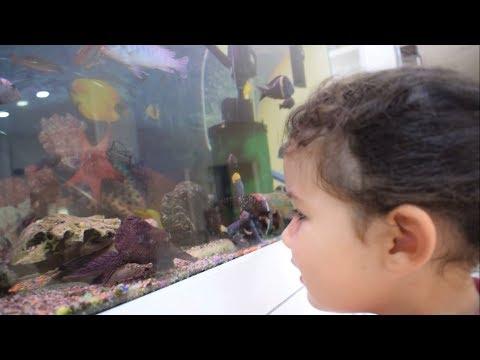 Akvaryumundaki Balıkla Göz Göze Geldik / Eğlenceli Çocuk Videosu #funnykid #funnykids #funnyvideo