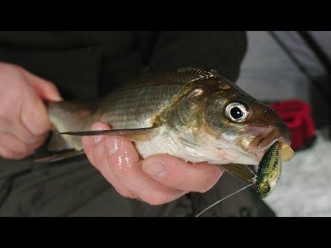 Ice Fishing Green Bay Whitefish - In-Depth Outdoors TV Season 12, Episode 12