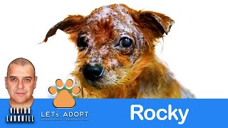 Hope For Paws Rescue Rocky Who Lost the Will to Live