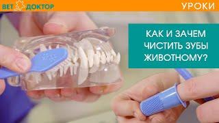Как правильно чистить зубы собаке в домашних условиях. Уход за зубами и профилактика зубного камня