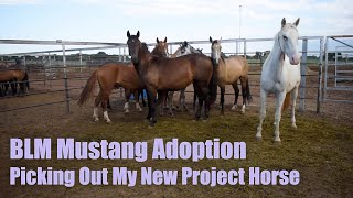 BLM MUSTANG ADOPTION | Picking Out My New Project Horse